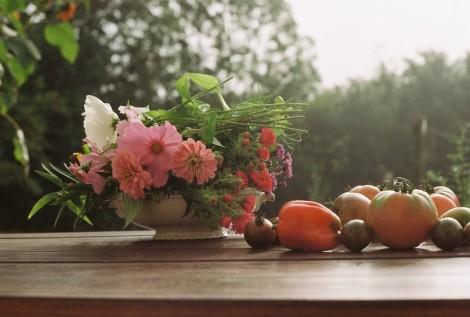 aus-dem-garten-tomate-paprika-blumen-_cosmea