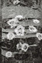 ribnitz-damgarten-double-exposure