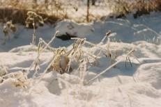 graser-im-schnee